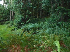 Ferns on the Low End of Property.